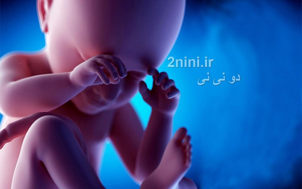 تکامل مغز کودک